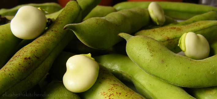 broad-beans-2