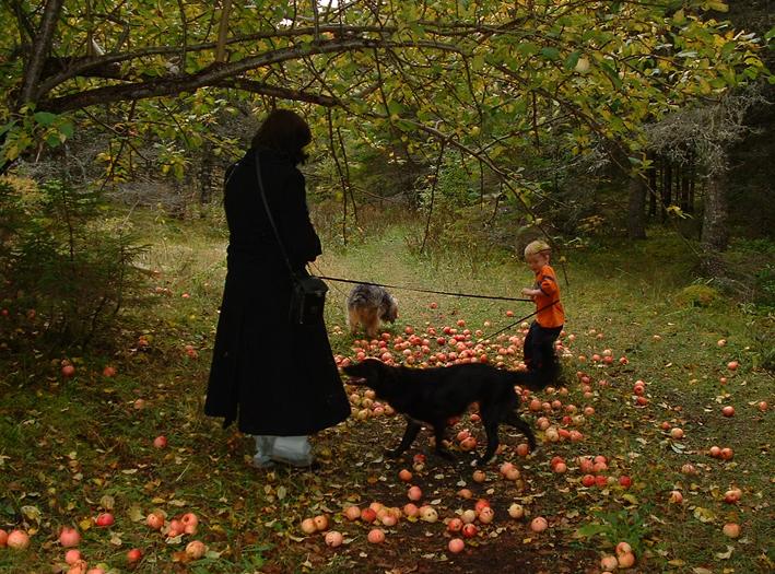 Cape Breton Island Wild Apples