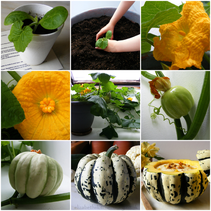 pumpkin collage sm