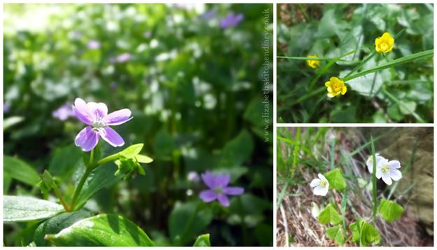 Kergord Wildflowers