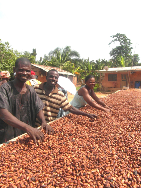 Drying Cocoa Beans by Emma Tagg of Thorntons