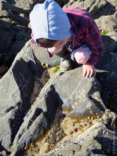 Rockpooling at Leebitton Shetland