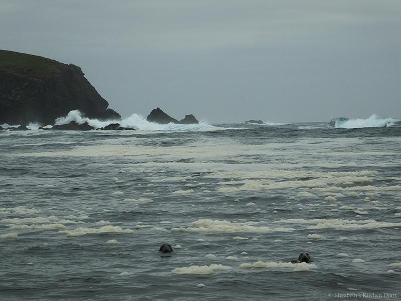 Shetland Seals Sea Foam