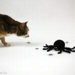 Jack Skellington Crochet Spider Cat Toy