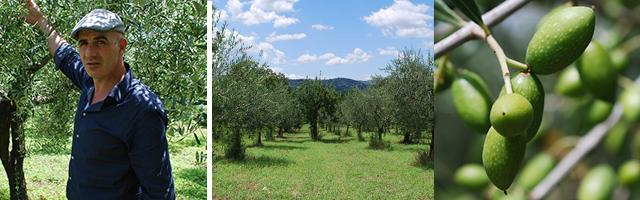 Antonio's Olive Oil