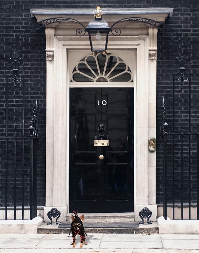 Downing Street ninja dog