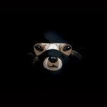 PiCK UP ninja dog