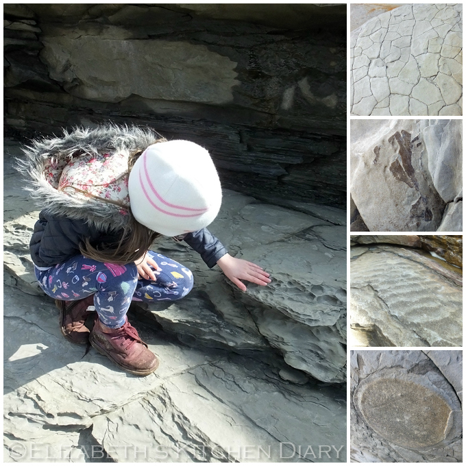 Fossil Hunting at the Melby Fish Beds