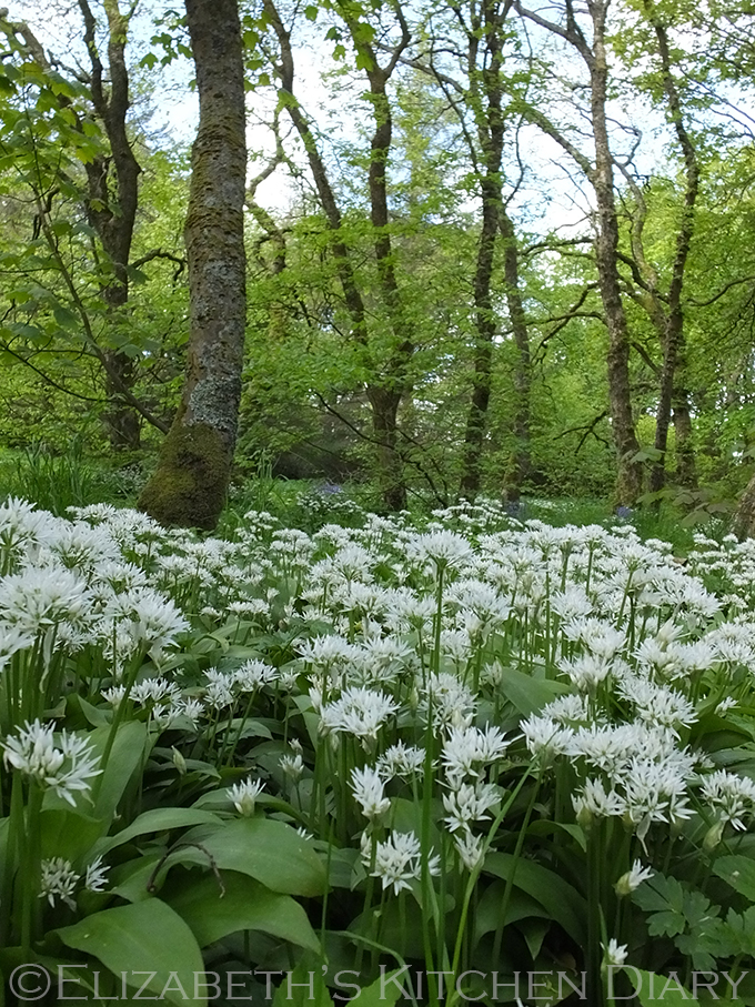 Wild Garlic in Kergord