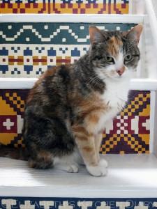 Fair Isle Stairs cat