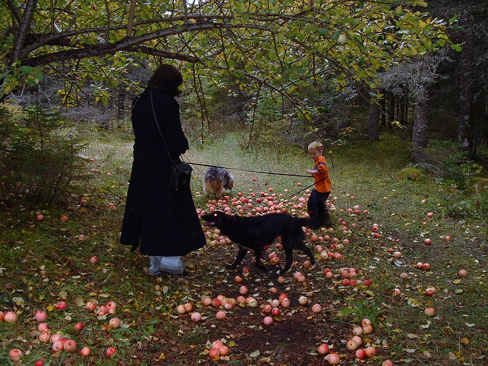 Cape Breton Apple Fall