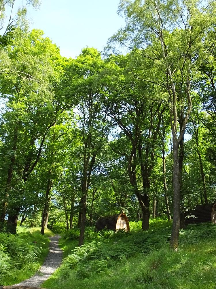 Grizedale Campsite - Bowkerstead Farm