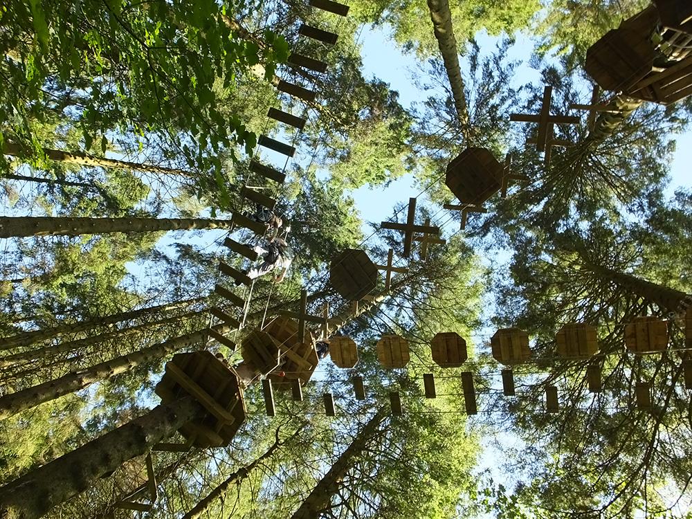 Grizedale Go Ape Treetop Adventure