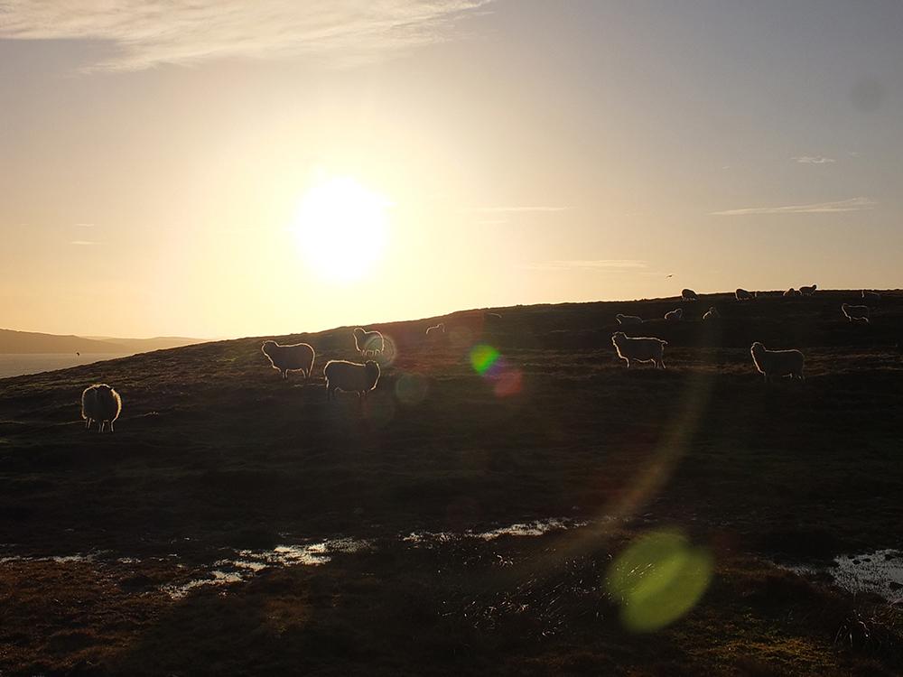 Midwinter Sun, Shetland