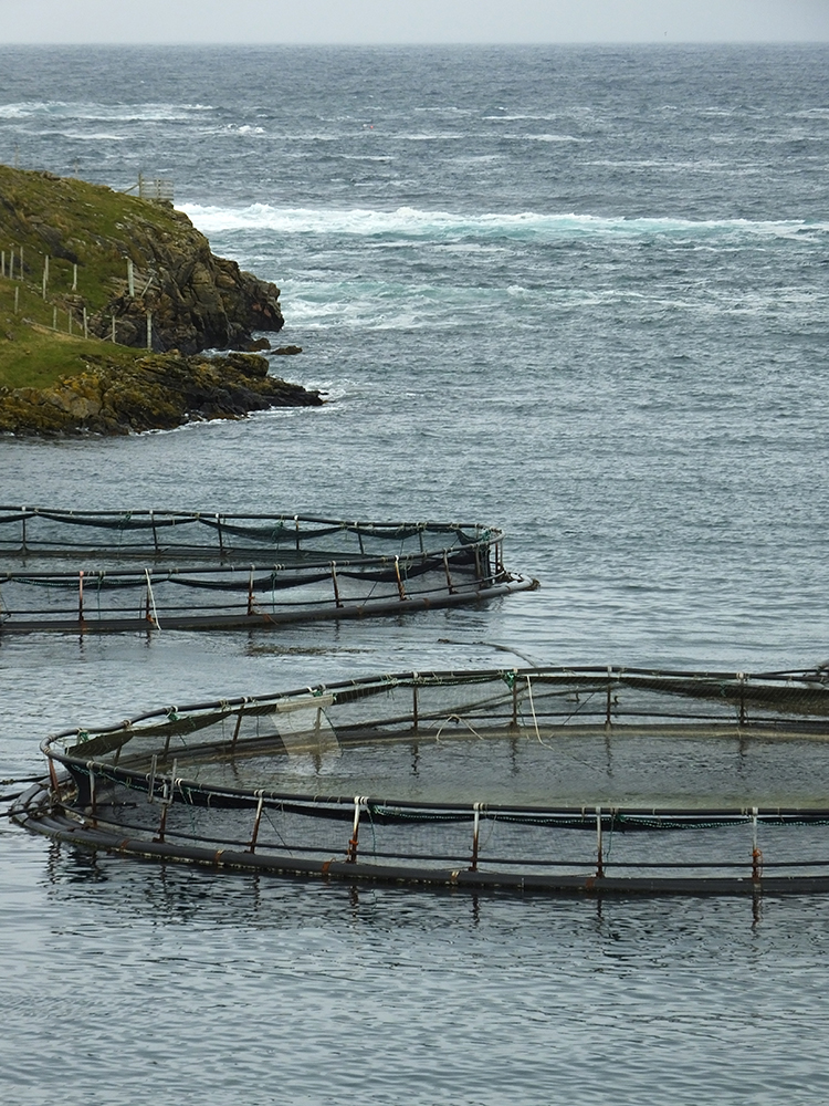 Out Skerries Salmon Farm, Shetland