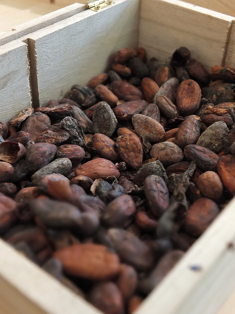 Cocoa Beans, Museum of Cocoa and Chocolate, Brussels