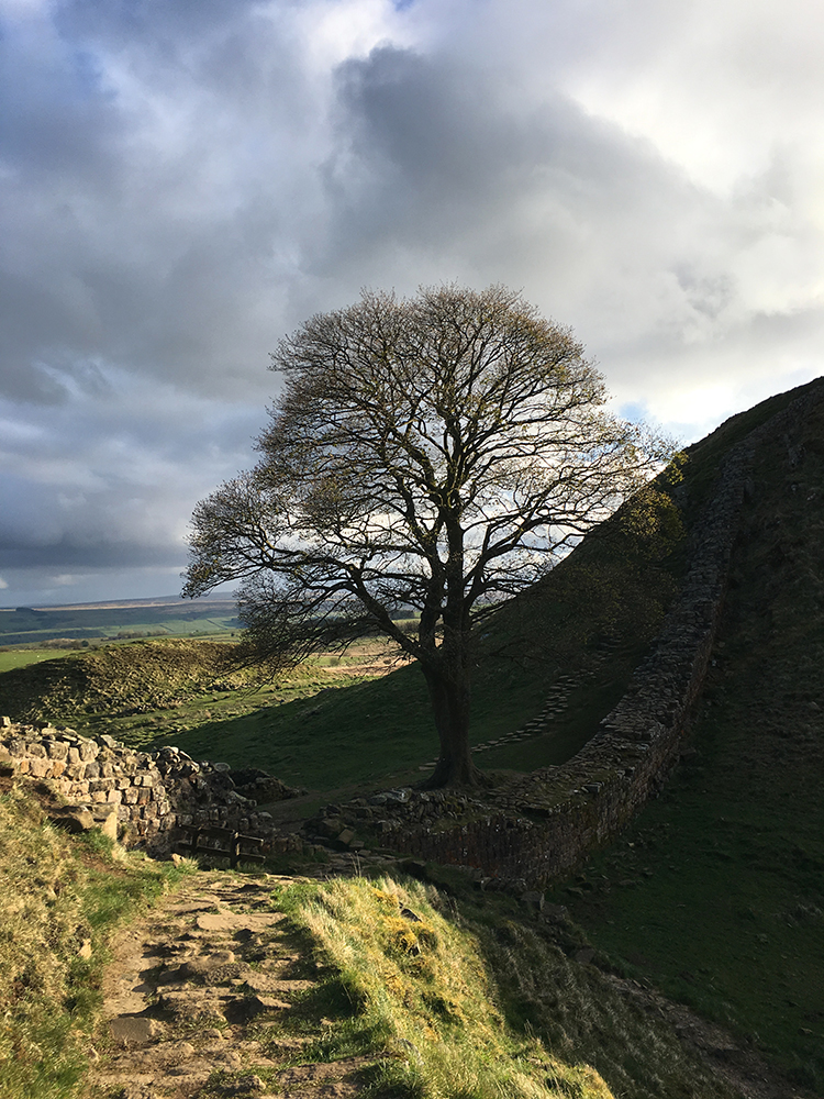 Walking Hadrian's Wall - Sycamore Gap