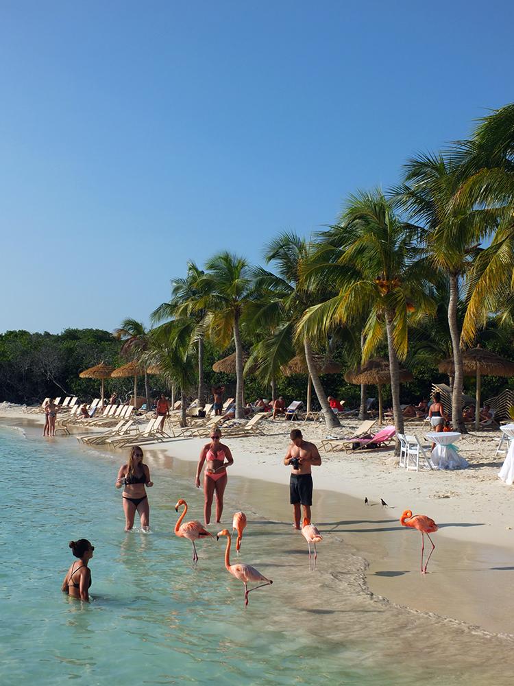 Flamingo Beach On Renaissance Island