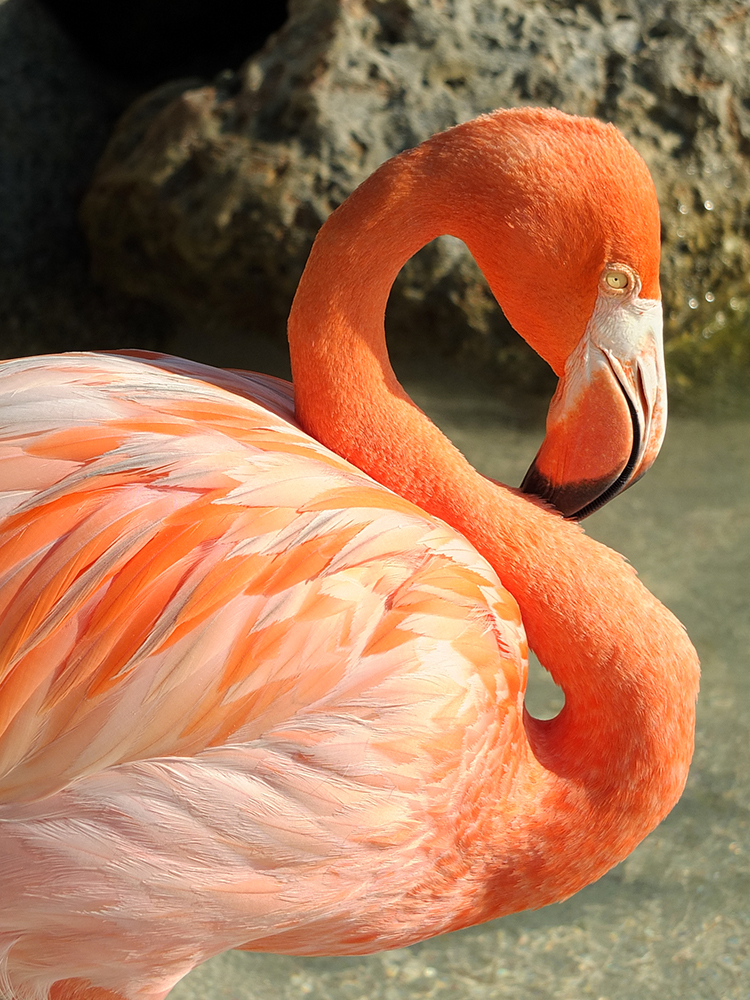 How to Visit Flamingos in Aruba