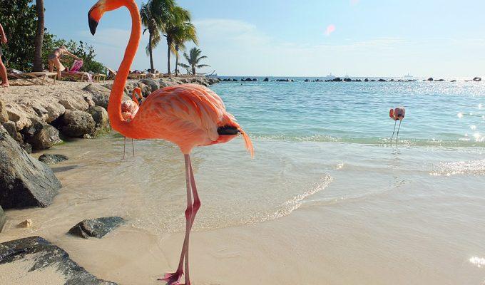 Visit the Flamingo Beach at Renaissance Aruba