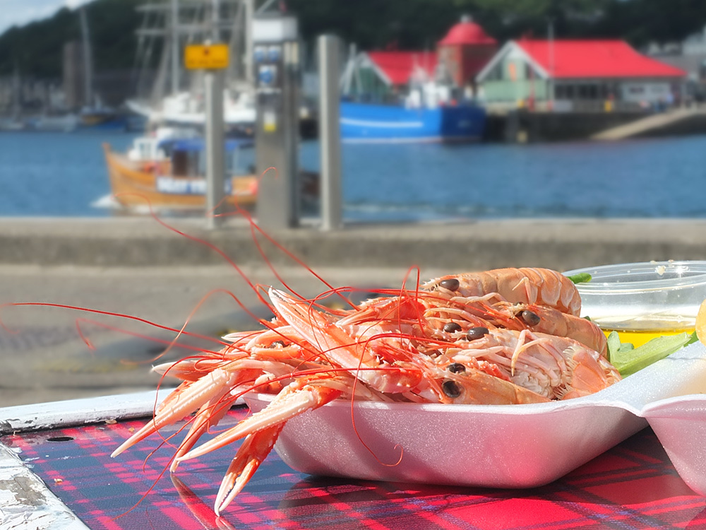 Langoustines in Oban, West Coast Scotland