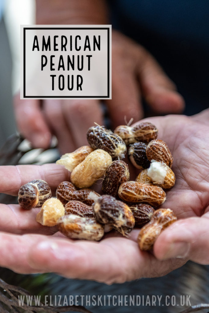 How are peanuts grown? How are they processed? How is peanut butter made? These are some of the questions we had answered on our American Peanut Tour in Georgia USA! #peanuts #usa #georgia