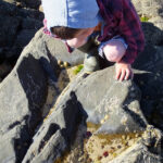 Rock Pooling with Colin the Crab & a Gone Crabbing Giveaway