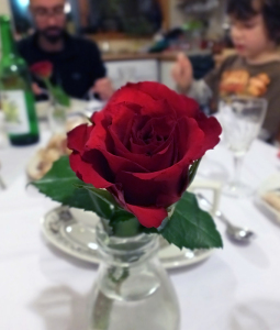 birthday rose
