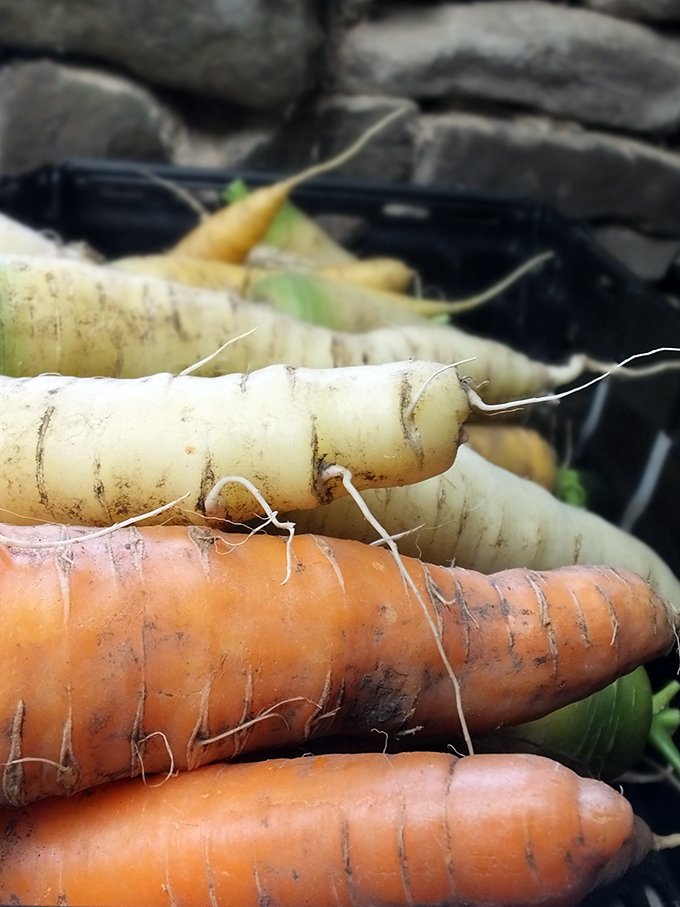 Turriefield Carrots
