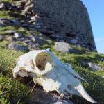Burra Ness Broch, Shetland