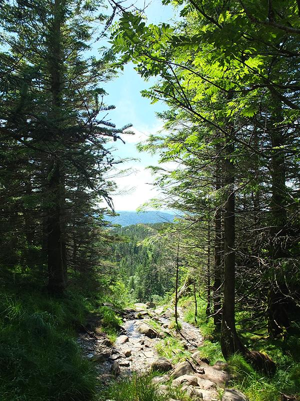 Bergen Forest Walk