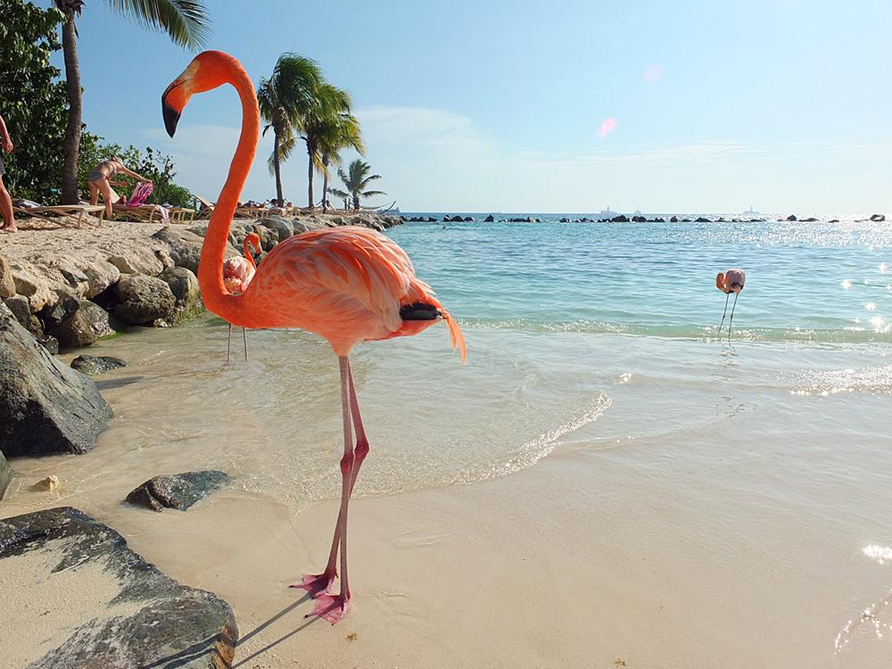 Flamingo Island Uk