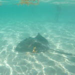 Swimming with the Stingrays in Grand Cayman