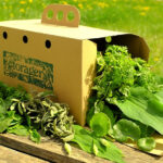 The Wild Food Box Scheme from Forager Ltd