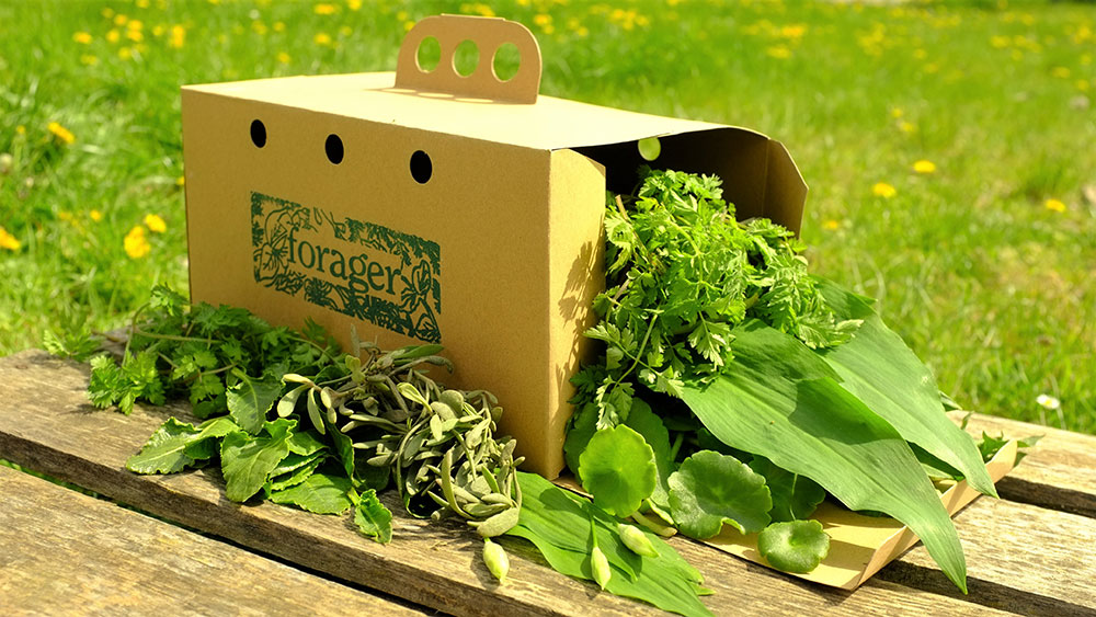 The Wild Food Box from The Forager Ltd