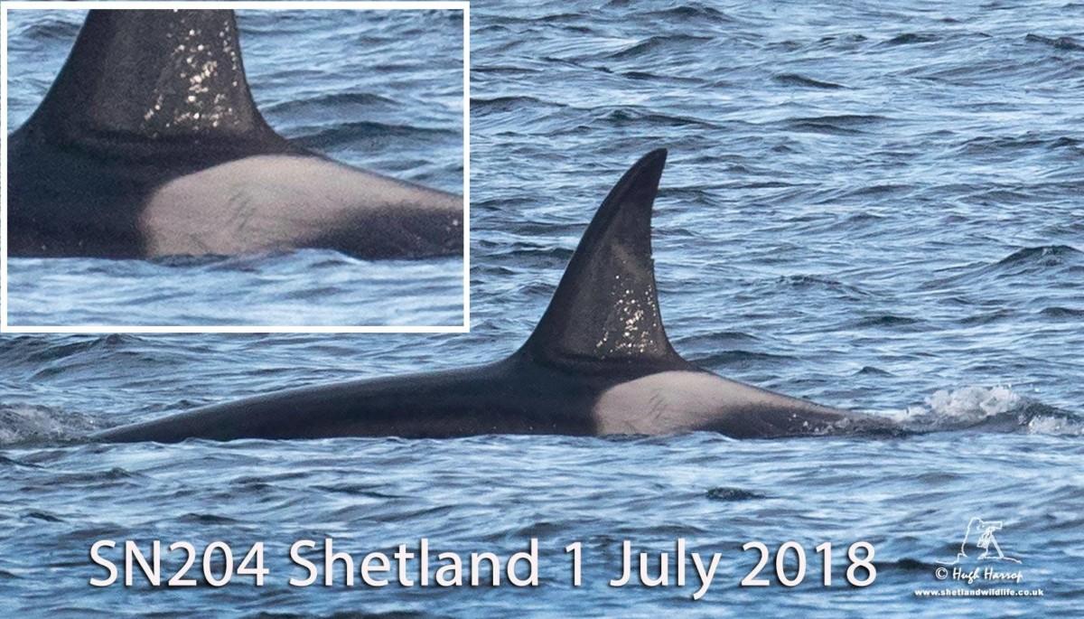 Hugh Harrop / Shetland Wildlife
