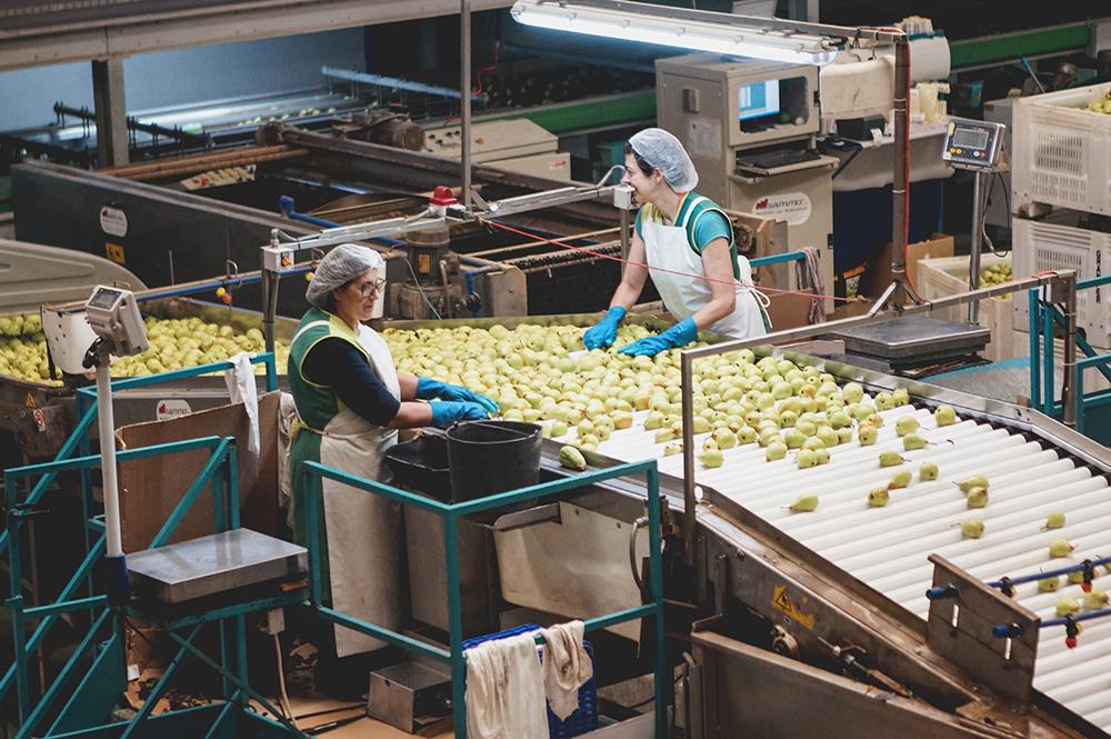 Rocha Pear Processing Unit Granfer Obidos