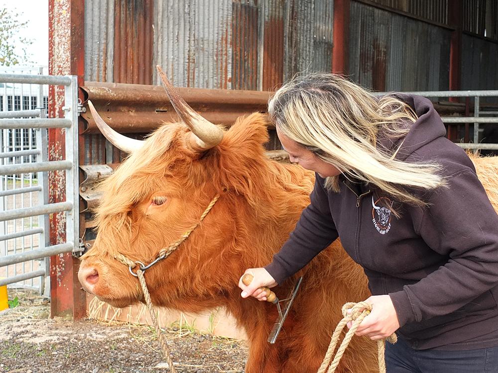 Aberdeenshire Highland Beef